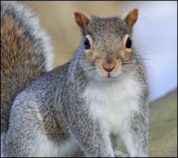 squirrel-removal